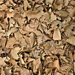 freetoedit leaves leavesontheground autumnleaves lifecycle