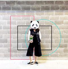 wapshapes panda black fashion