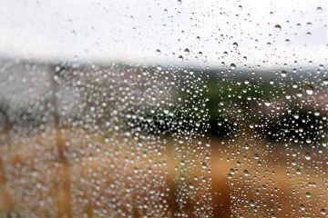 photography rain nature