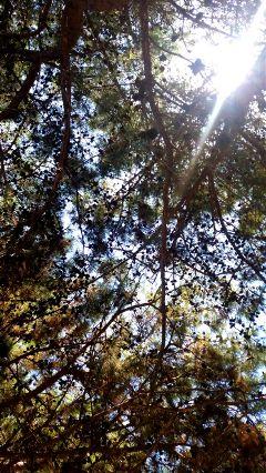 tree trees sun hope nature