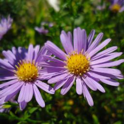 photography flower msflowers сентябрь цветы