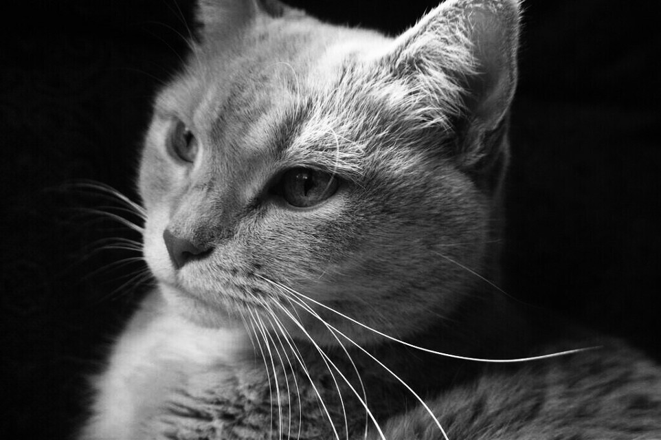 #FreeToEdit  #cute  #photography  #animals  #cat  #blackandwhite