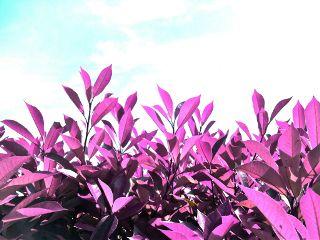 emotions pink nature sky leaves freetoedit