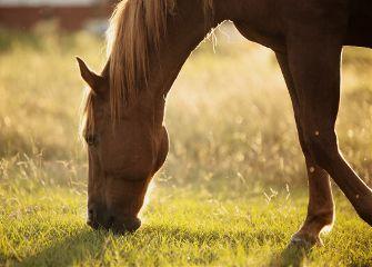 horse portrait landscape nature bokeh