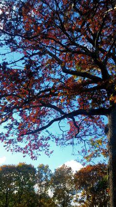 autumn freetoedit nature