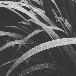 blackandwhite nocolor drops picsart cool