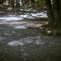 interplay tree leaves children light