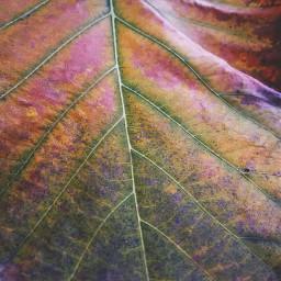 autumnleaves autumncolors autmn nature leaflove