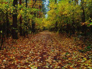 photography colorful nature autumn freetoedit