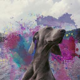 freetoedit interesting dog colorsplash paintsplatter