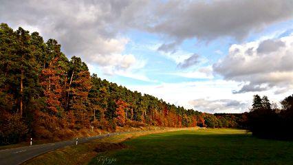 autumn autumnleaves landscape forrest golden