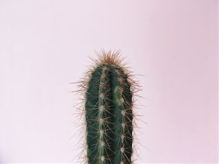 cactus interesting art simple cool freetoedit