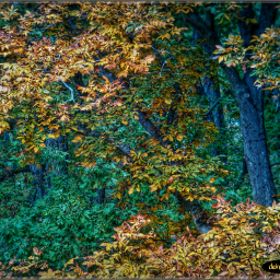 trees changingcolors leaves leaveschanging autumncolors