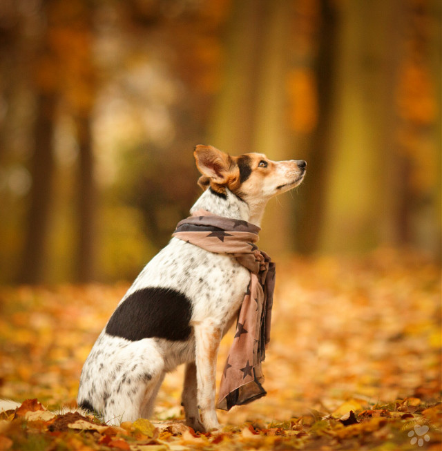 Oh, it's already so cold outside 😓 Follow us on Instagram to see more pictures!→@ faithful.heart     #bokeh  #colorful  #cute  #love  #nature  #petsandanimals  #photography  #rain  #dog  #colorfulworld  #november  #autumn  #fall  #fallcolors  #dogphotography  #dogphotographer #rescueddog