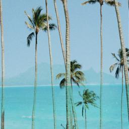 hawaii paradise freetoedit