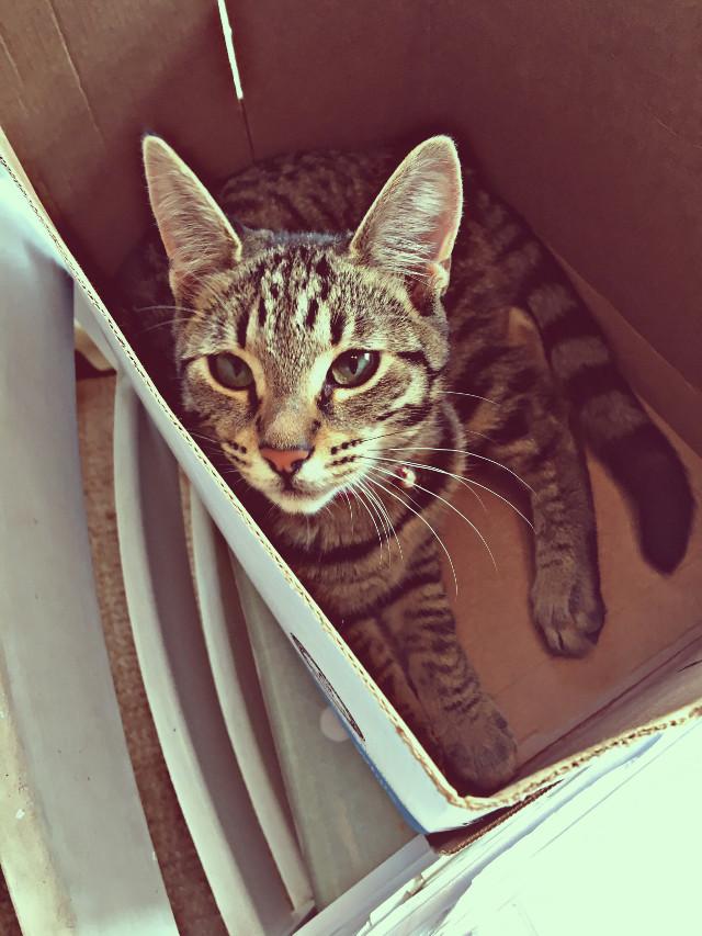 #kitten #box #cute #interesting #pretty #bella 🐱