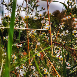 sunny flowers wildflowers field country