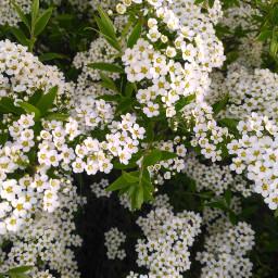 фото фотографии цветы цветок природа freetoedit