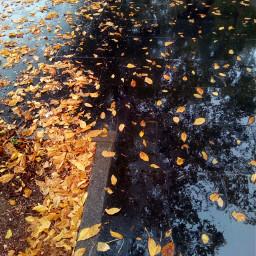 leaves fallenleaves leavesfall leavesontheground autumn