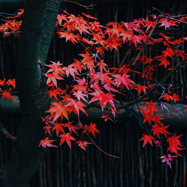 in Kyoto #kyoto
