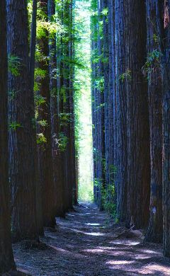 trees emotions forest path green