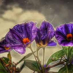 flower madewithpicsart photography nature simplethings