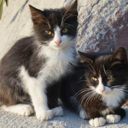 kittys cat cute meow love