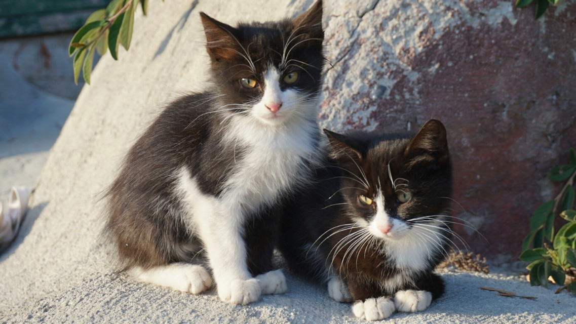 #kittys  #cat #cute #meow #love #photography