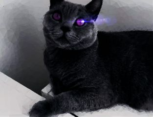 freetoedit moon darkness cats catedits