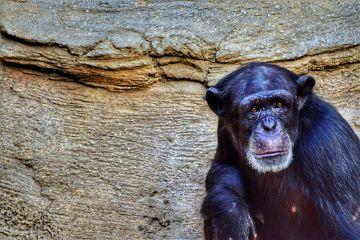 zoo mono bioparc fuengirola malaga