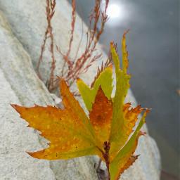leaveschanging